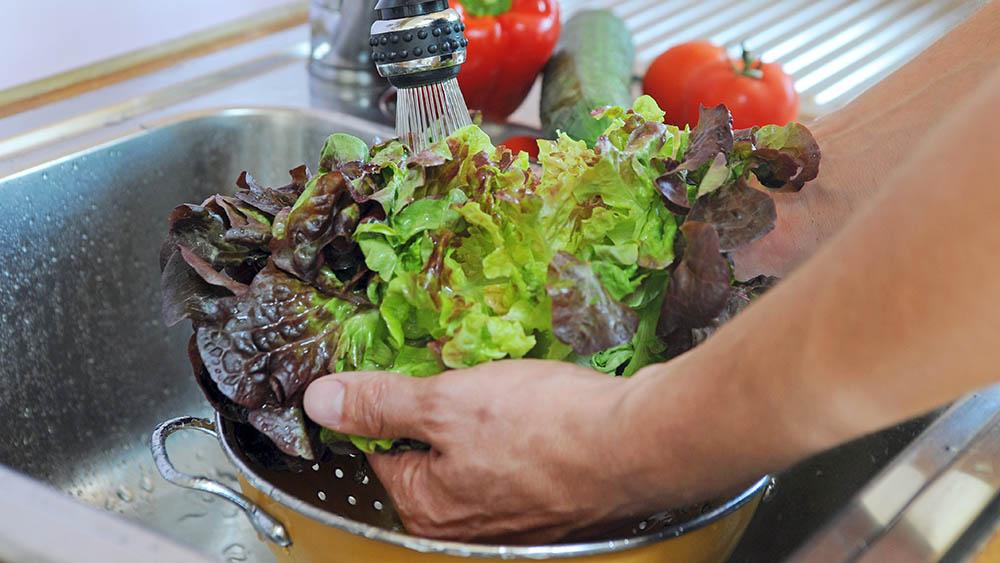 alface verdura