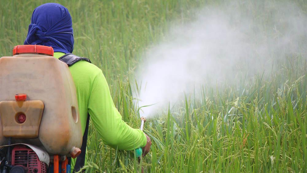 Homem espalhando agrotóxicos em plantação.
